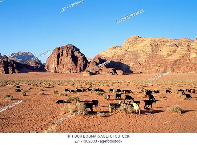 Jordan, Wadi Rum, desert landscape, goats