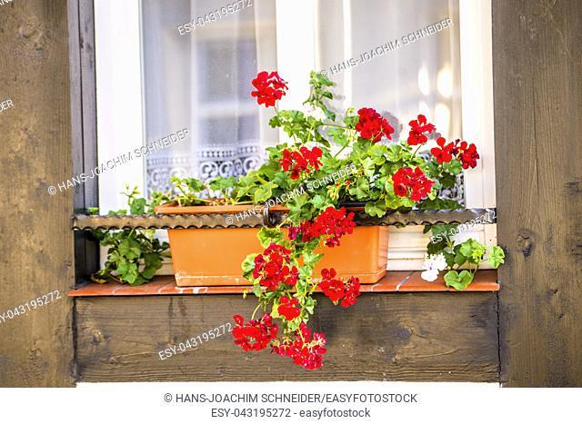 Window with pretty flower arrangement