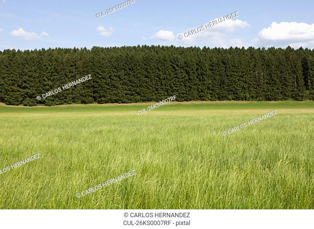 Green grass in front of trees
