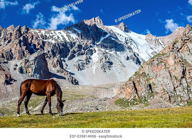 Grazing horse at sunny day in high snowy mountains, Tien Shan, Kyrgyzstan