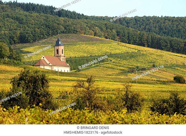 France, Bas Rhin, Alsace Wine Route, Orschwiller, village, church, vineyard