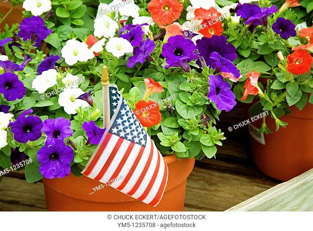 American Flag in Petunia Planter celebrating the 4th of July