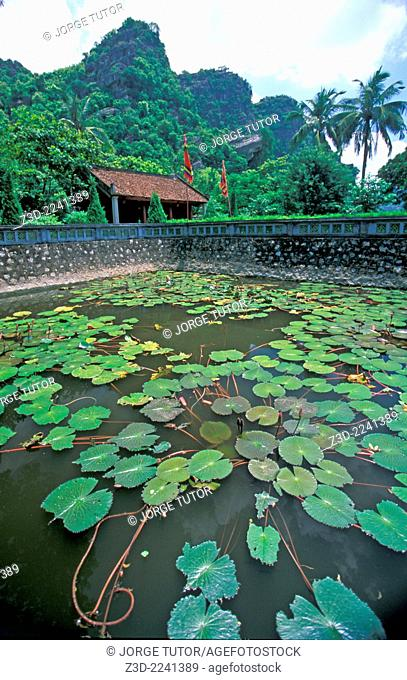 Lotus pond at Hoa Lu Temple Vietnam