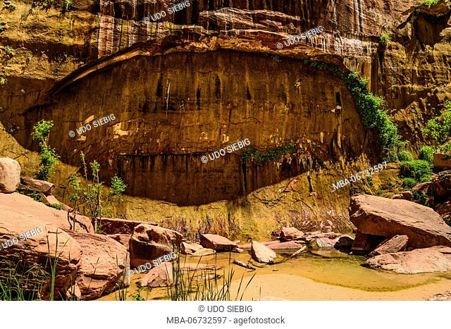 The USA, Utah, Washington county, Springdale, Zion National Park, Zion canyon, Gumpe, pond at The Temple of Sinawava
