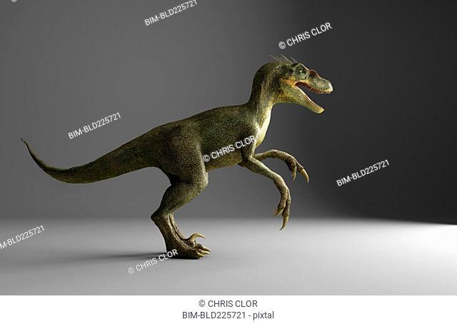 Velociraptor dinosaur standing on gray background