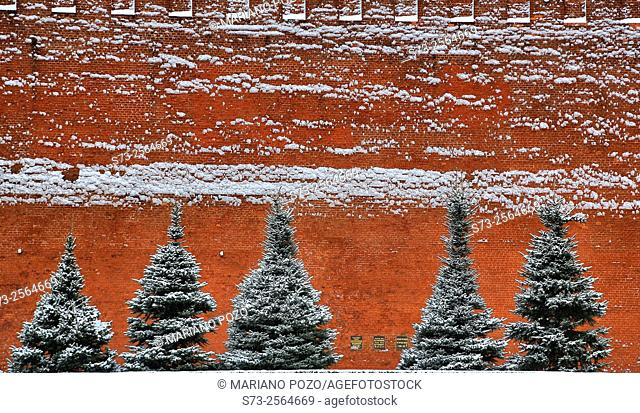 Trees with snow in the Red Square, Moscow, Russia