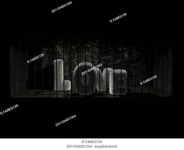 a fluffy word with white hair behind bars with black background