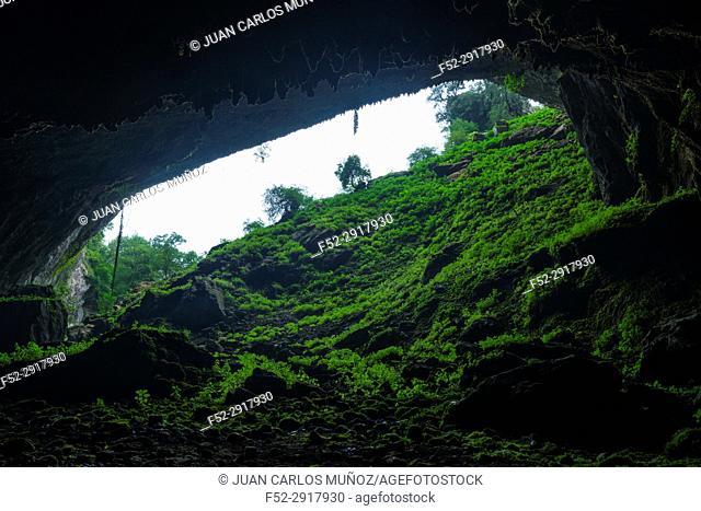 Ferns in The Cubilla Cave in Castro Urdiales, MOC Montaña Oriental Costera, NATURA 2000, Cantabria, Spain, Europe