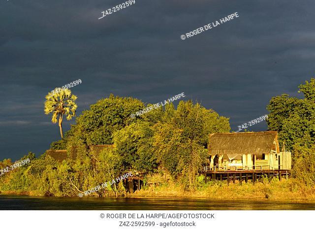 Sindabezi Island, part of Tongabezi Lodge with Lala palm (Hyphaene coriacea). Victoria Falls. Livingstone. Zambia