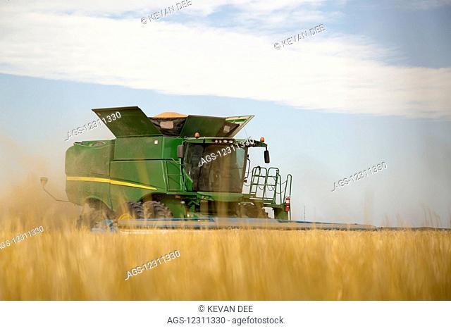 Combine cuts wheat in Northeast Colorado; Paoli, Colorado, United States of America