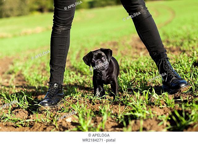 Puppy standing in between woman's legs on field