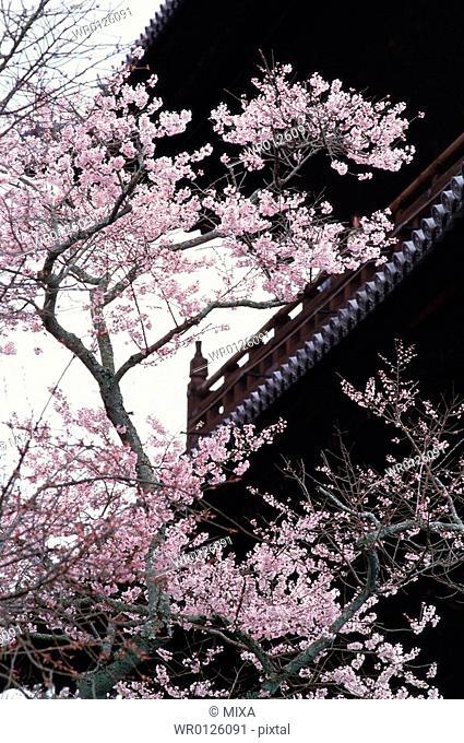 Nanzenji Temple, Kyoto Prefecture, Japan