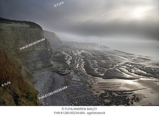 Limestone cliffs and rock strata, in clearing sea fog, Dunhaven Bay, Glamorgan Heritage Coast, Vale of Glamorgan, Wales, december
