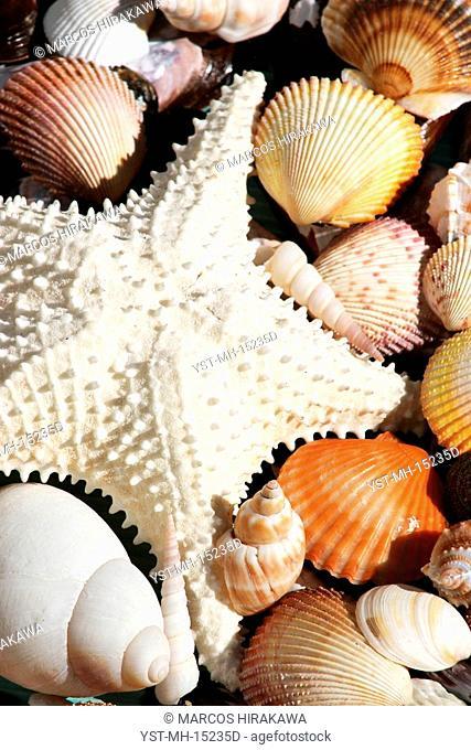 Shells, Starfish, Beach Pernambuco, Guarujá, São Paulo, Brazil