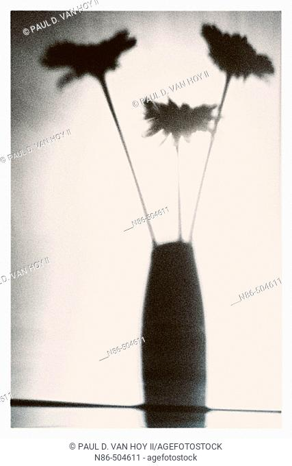 Silhouette of flowers in a vase
