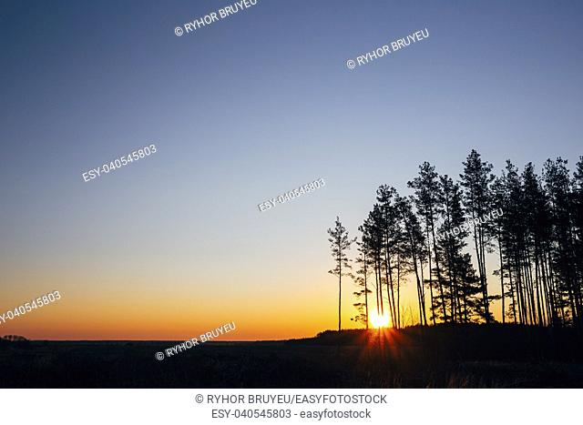 Gomel, Belarus. Sunset, Sunrise In Pine Forest. Bright Colorful Dramatic Sky And Dark Ground. Landscape Under Scenic Summer Dramatic Sky In Sunset Dawn Sunrise
