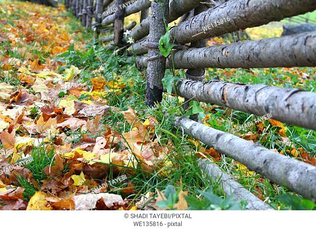 A wooden fence and the Autumn view in front in Stockholm, Sweden