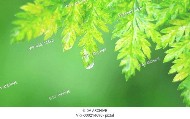 A drop of water falls off a leaf
