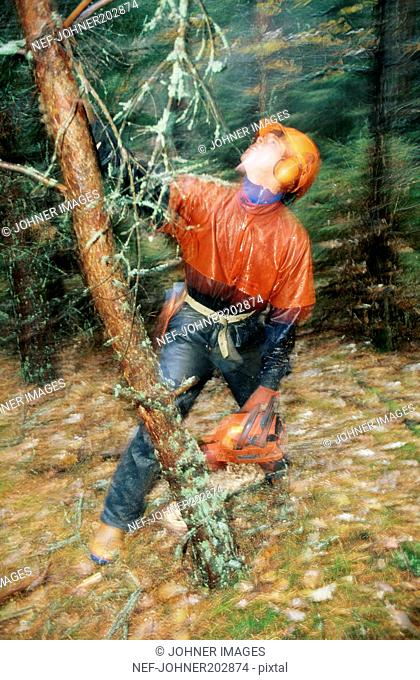 Wood cutter cutting trees in forest