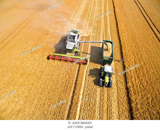 Aerial view of combine harvester filling tractor trailer in sunny golden barley field