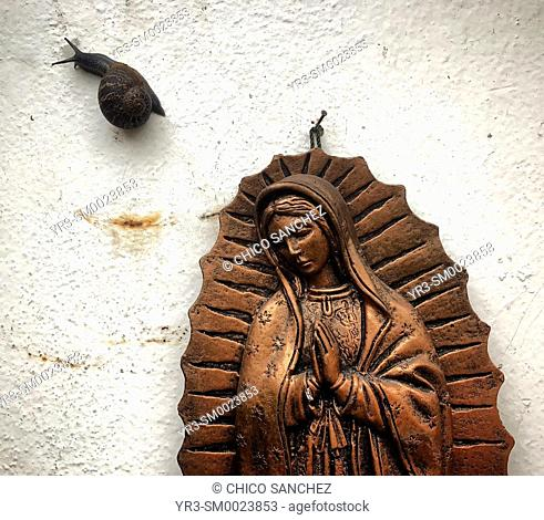 A snail walks near a golden sculpture of Our Lady of Guadalupe in Colonia Roma, Mexico City, Mexico