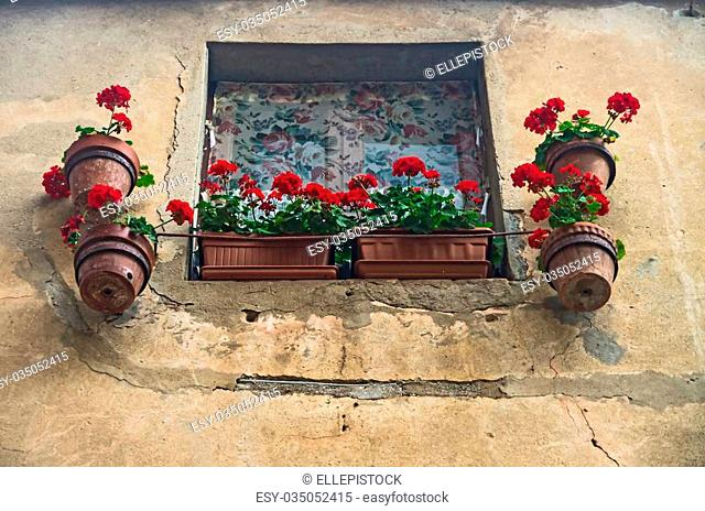 Small window adorned with some red pelargonium