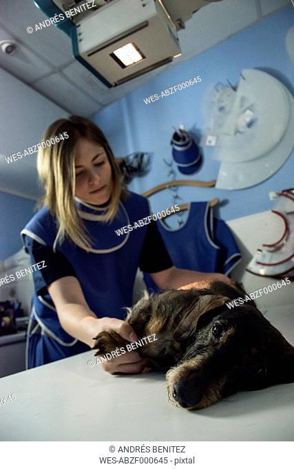 Veterinarian x-raying a dog