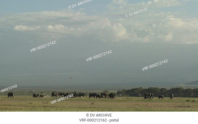 Clouds move in time lapse over a herd of elephants on the African savannah