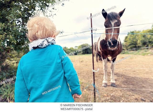 Little boy watching a horse