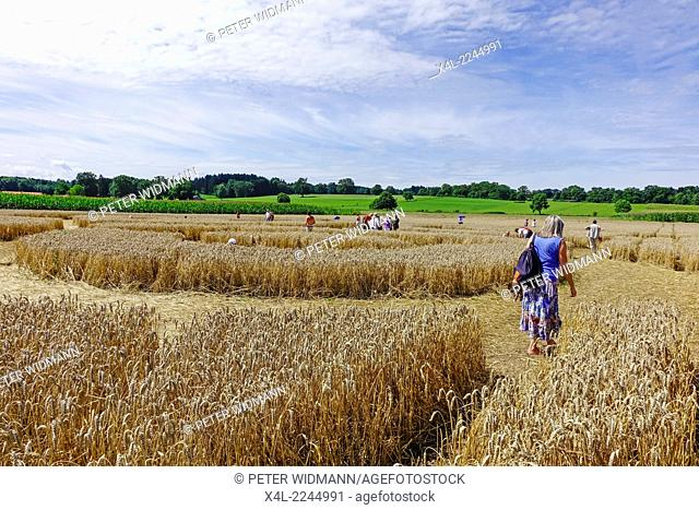 People admire a crop circle in a corn field at Rasiting, Upper Bavaria, Bavaria, Germany, Europe
