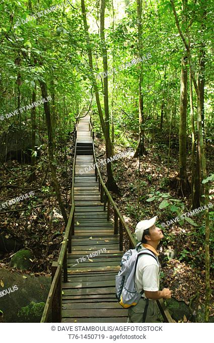 enjoying the rainforest and jungle in Gunung Gading National Park, Sarawak, Borneo, Malaysia