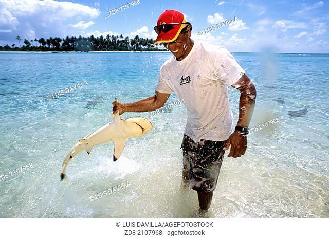 little shark.rangiroa.Polynesia