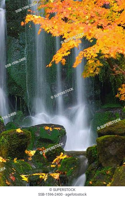 Waterfall in a forest, Heavenly Waterfall, Lower Pond, Portland Japanese Garden, Washington Park, Portland, Oregon, USA