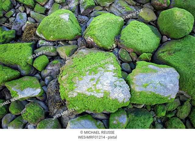 Norway, Lustrafjord, Moss covered rocks, elevated view