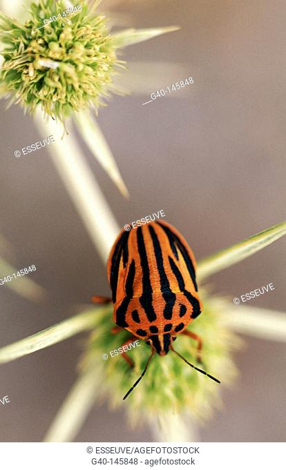 Insect and plant