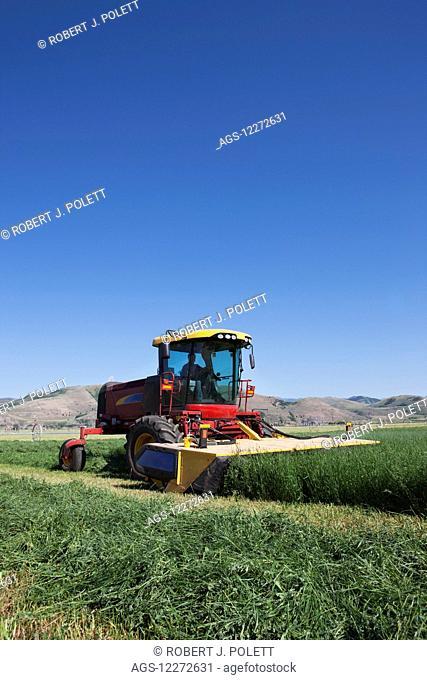 New Holland H8060 cutting Alfalfa; Preston, Idaho, United States of America