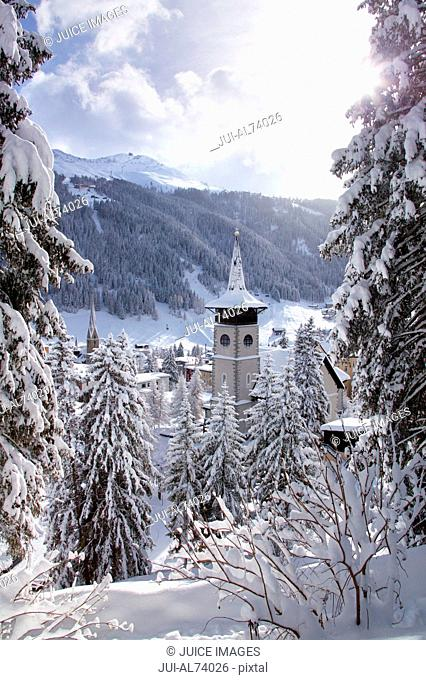 Low angle view of snow-covered fir trees, Davos, Graubuenden, Switzerland