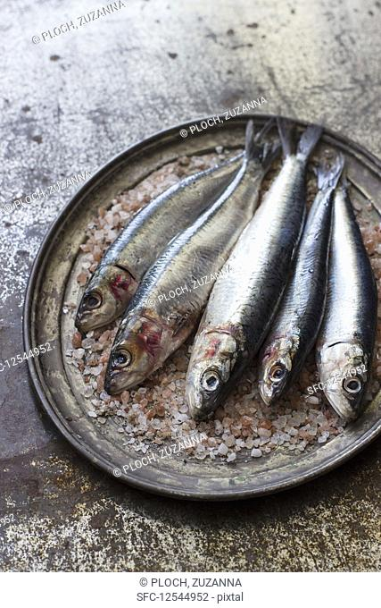 Fresh sardines on a metal tray