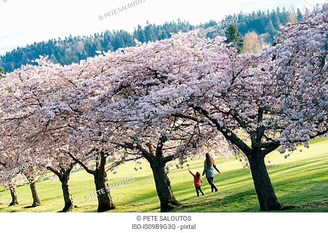 Girl and mother strolling in park by cherry blossoms