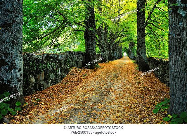 Track in the wood. San Lorenzo de El Escorial, Madrid province, Spain