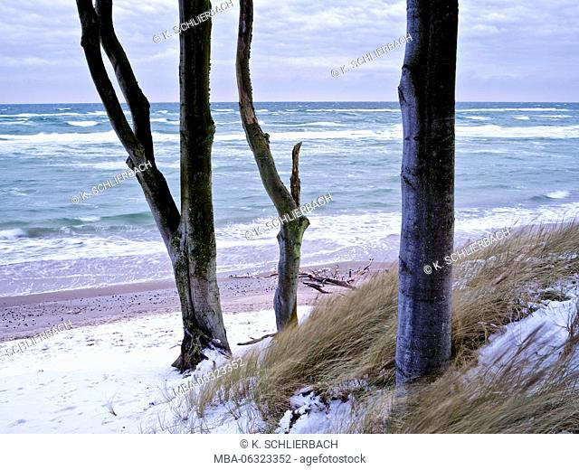 Germany, Mecklenburg-Western Pomerania, Western Pomerania Lagoon Area National Park, winter day on the West beach of Darss, trunks of beeches