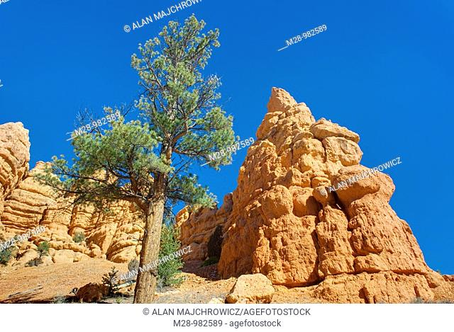 Hoodoos and rock formations in Casto Canyon of Red Canyon, Dixie National Forest Utah