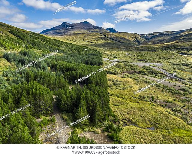 Forest area, Brynjudalur, Hvalfjordur, Iceland. This image is shot using a drone