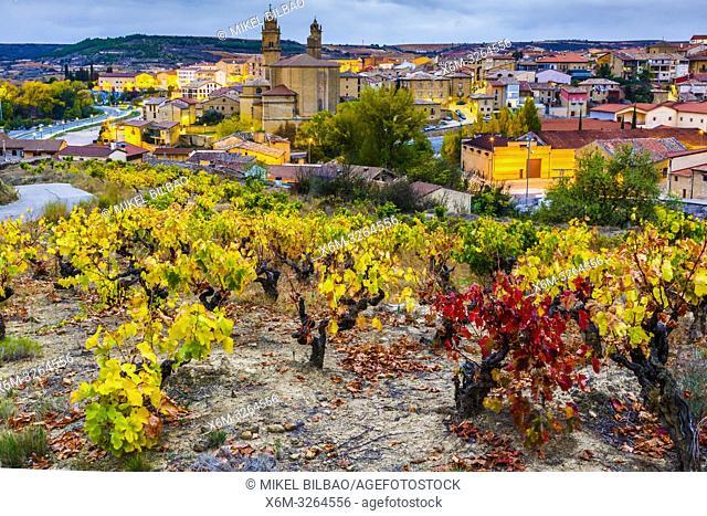 Vineyards in autumn. Elciego village. Rioja alavesa county. Alava, Basque Country, Spain, Europe