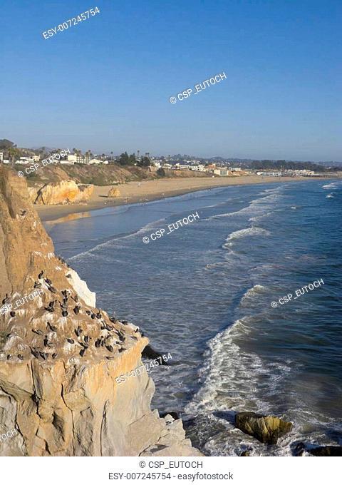 Pelicans Cliff at Pismo Beach, CA