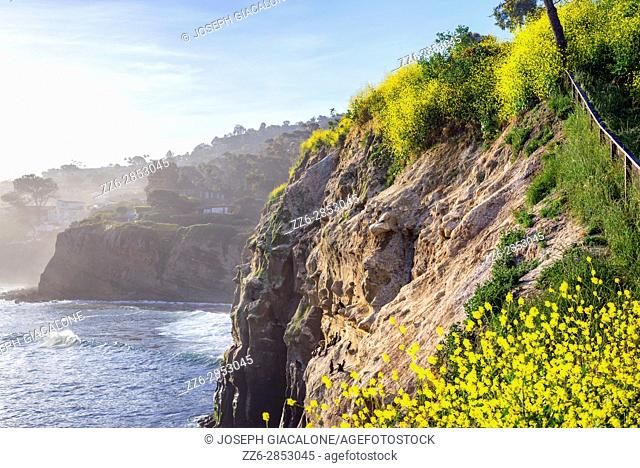 Wildflowers above the La Jolla, California coastline photographed on a Spring morning