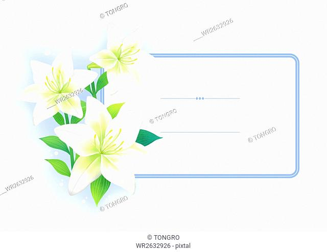 Frame with white lilies