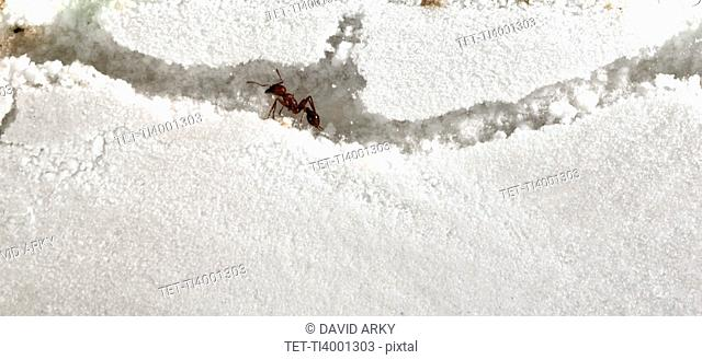 Close up of ants in sand