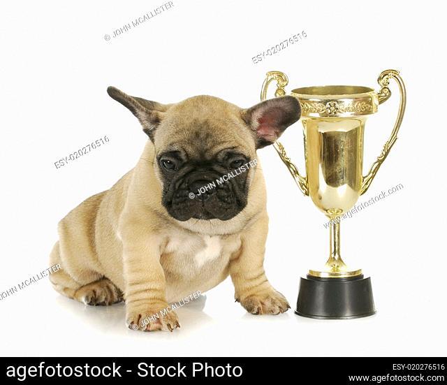 dog winning