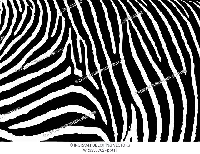 Black and white zebra pattern background with simple deisgn